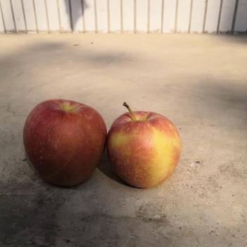 美八蘋果,新鮮出爐,甘甜可口,預購從速