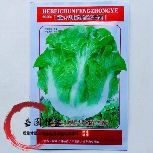 四川省南充市西充县生菜籽 意大利耐抽苔生菜种子包邮