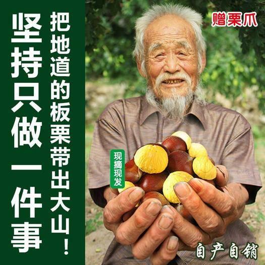 2019 板栗 生新鲜生栗子毛栗子 现摘现发【坏果包赔】