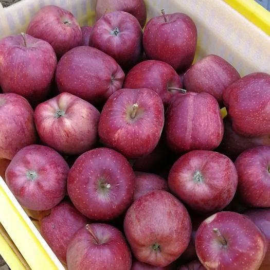 甘肅省隴南市禮縣花牛蘋果 95mm以上 全紅 膜袋