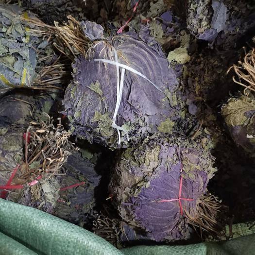 安徽省亳州市譙城區紫蘇葉 蘇葉大葉貨漂亮價格美麗