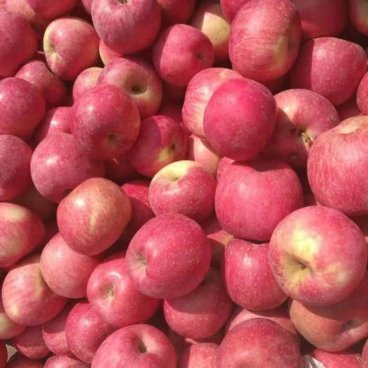 陜西省銅川市耀州區 紅富士蘋果,30元10斤一箱包郵
