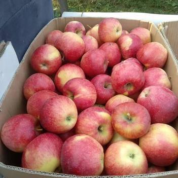丹霞蘋果 70mm以上0.8/斤