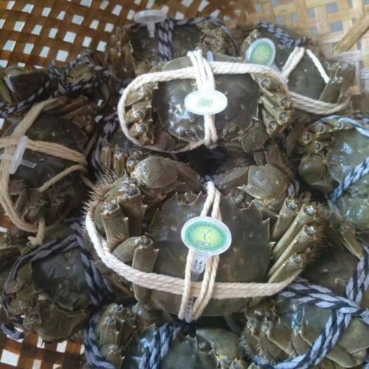 阳澄湖精品 大闸蟹公2.5两一母2两,有防伪溯源码