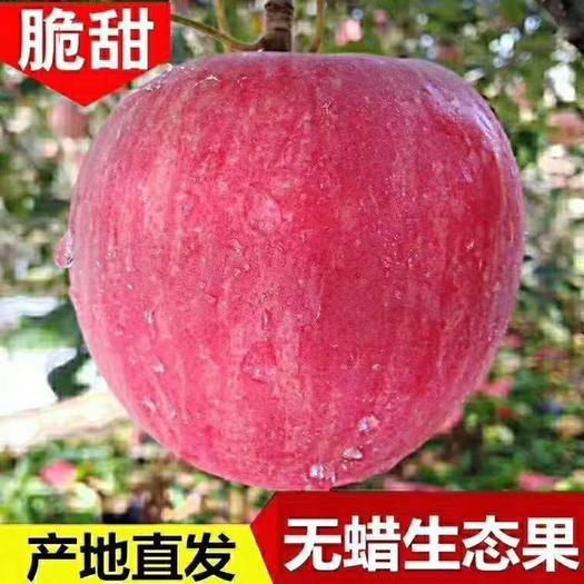 甘肅省隴南市西和縣紅富士蘋果 甘肅冰糖心紅富士
