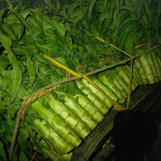 山東省臨沂市蘭陵縣紅葉香萵苣 大量萵苣上市價格.0.08--0.2之間,每天供應100萬斤