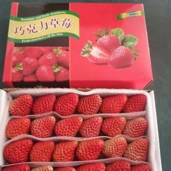 九九草莓 丹东巧克力装15 20 24 28粒寻求批发商烘焙水果捞专用