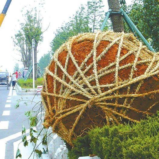 江蘇省南京市溧水區農技人員 苗木大樹種植、移植、采購