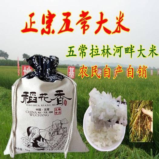 黑龙江省哈尔滨市五常市五常大米 五常稻花香粥米(半碎米)