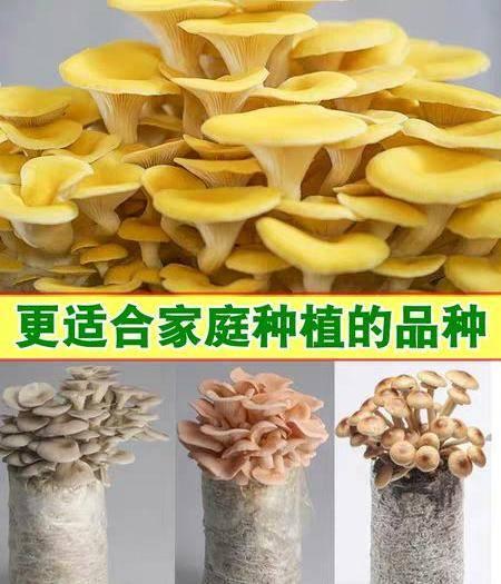 吉林省白山市长白朝鲜族自治县香菇菌种 蘑茹菌包菌种