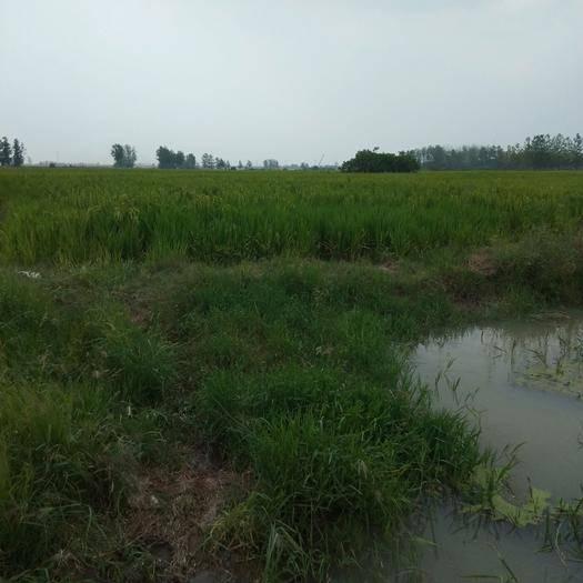 安徽省合肥市蜀山区水田 群里老板们可有人需要虾塘200一300亩都可以,地平,可养殖