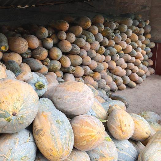 云南省紅河哈尼族彝族自治州建水縣蜜本南瓜 欲購從速,歡迎騷擾。照片是以前拍的,現在更黃。