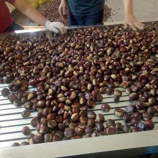 江西省赣州市瑞金市 这个板栗确实很甜很好吃,吃起来很香。