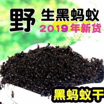 螞蟻 西藏特產藏200克裝綠色食品高原無污染風 濕關 節泡酒