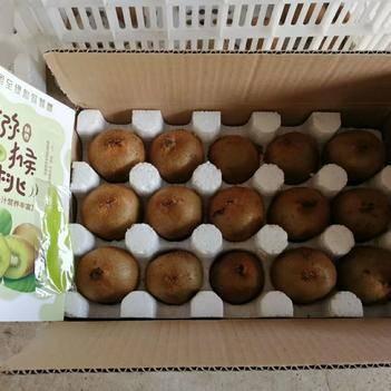 15元搶5斤包郵 陜西綠心獼猴桃