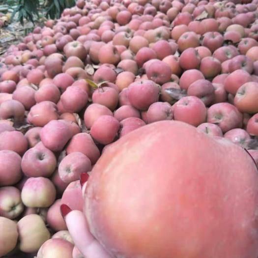 山東省臨沂市莒南縣 紅香蕉蘋果