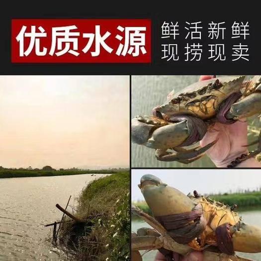 广东省珠海市金湾区 大肉青蟹、膏蟹,黄油蟹、重壳蟹、奄仔蟹批发零售商