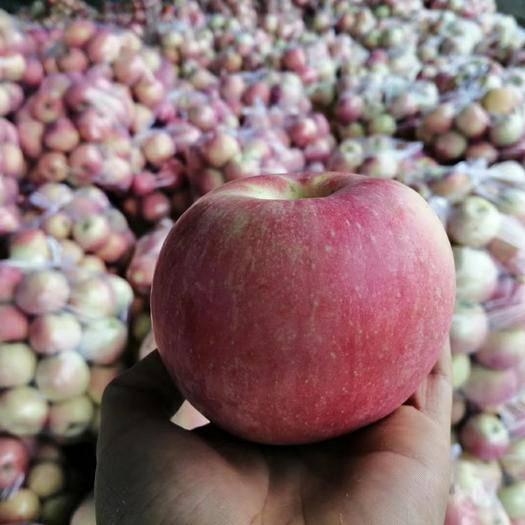 陜西省咸陽市興平市 10斤25包郵陜西富士蘋果有壞果包賠一件發貨