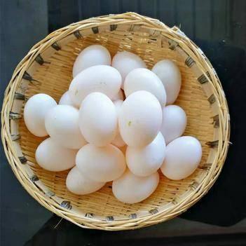 鸽子蛋柴鸡蛋散养土鸡蛋包邮受精蛋肉鸽蛋银羽王白羽王乳鸽