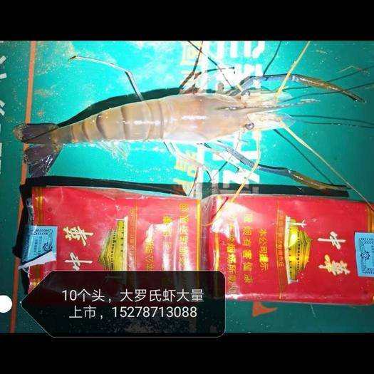广西壮族自治区钦州市钦南区 大个罗氏虾上市