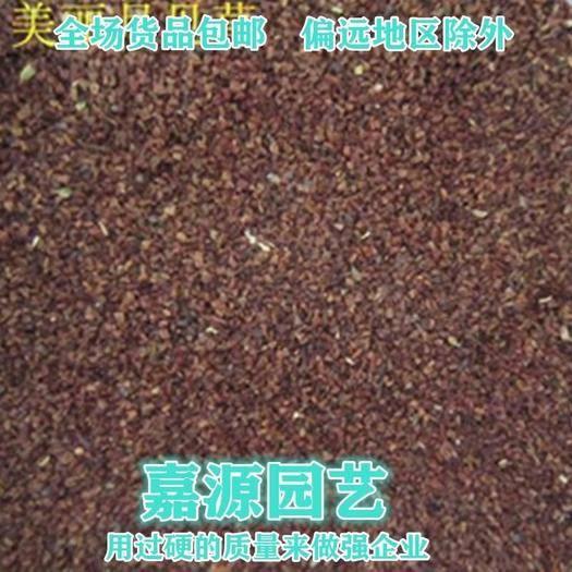 四川省成都市锦江区 月苋草种子新种子包邮