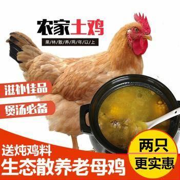 鸡肉类 2只更优惠农家2年老母鸡散养土鸡柴鸡草鸡笨鸡走地鸡
