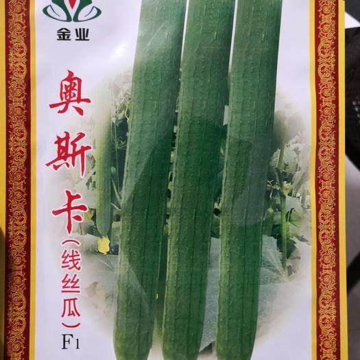 河南省商丘市夏邑县 奥斯卡线丝瓜种子,瓜条翠绿色,拔节短,抗病强,瓜条整齐