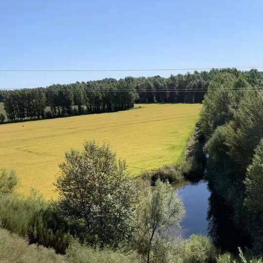 内蒙古自治区通辽市奈曼旗 林地加水田100亩 转包到2034年