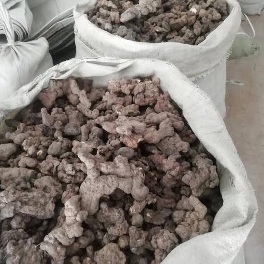 陕西省汉中市汉台区 猪苓