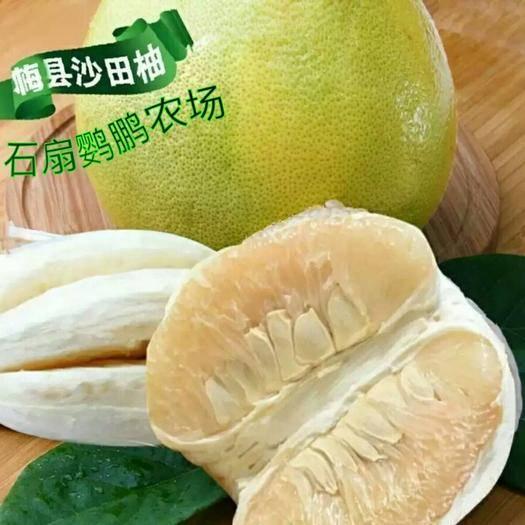廣東省梅州市梅縣區 梅縣沙田柚一件代發50斤/袋包郵梅州沙田柚金柚