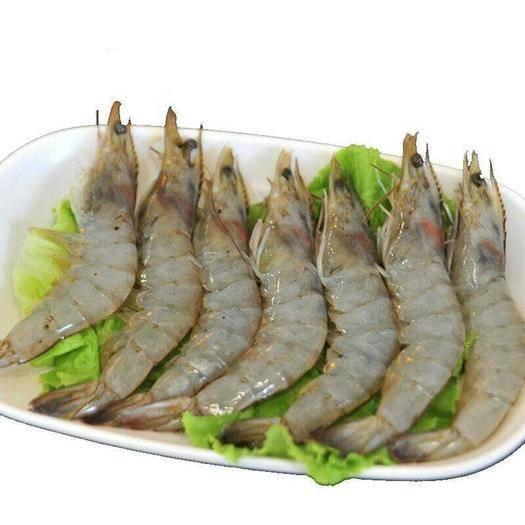 山东省青岛市崂山区青虾 青岛地区养殖大虾,现捕现卖