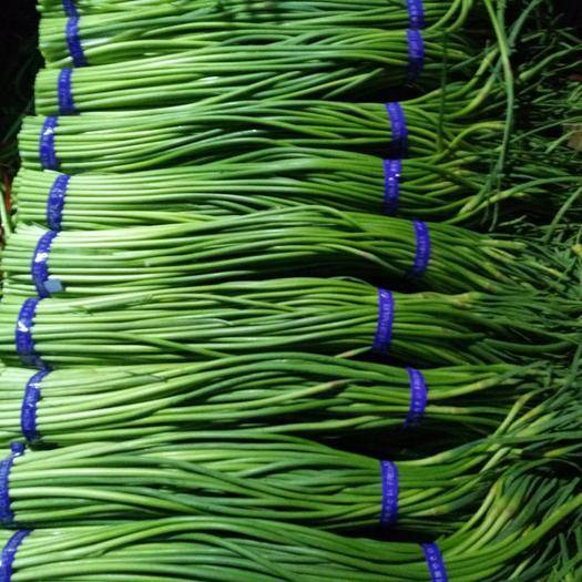 山東省濟寧市金鄉縣 精品蒜苔、產地直銷、一手貨源、價格便宜、天天有貨。