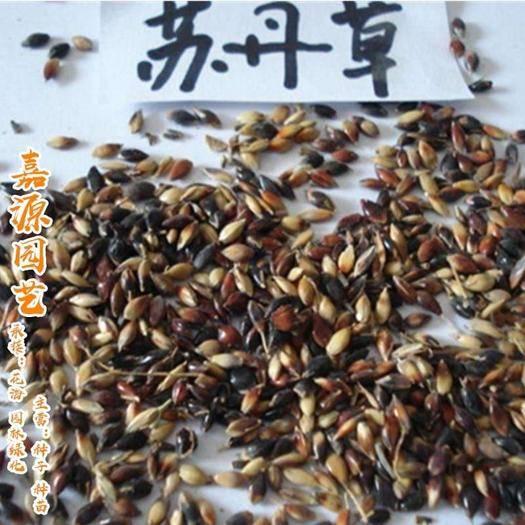 四川省成都市锦江区 进口苏丹草种子
