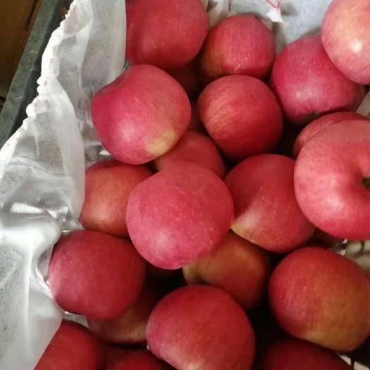 內蒙古自治區通遼市科爾沁左翼后旗寒富蘋果 皮薄水大寒富現摘現發!1.5一斤