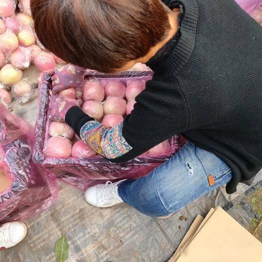 山西省運城市萬榮縣紅富士蘋果 75mm以上 片紅 紙+膜袋