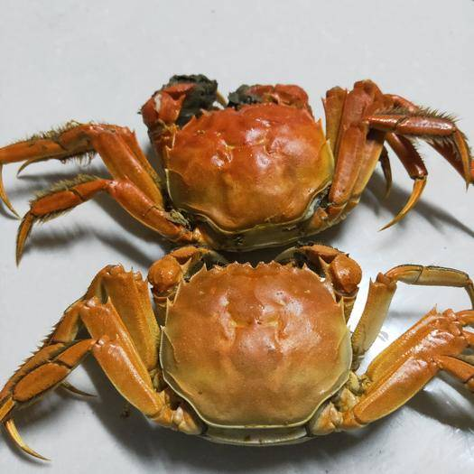 江苏省南通市如皋市青蟹 螃蟹。大闸蟹。