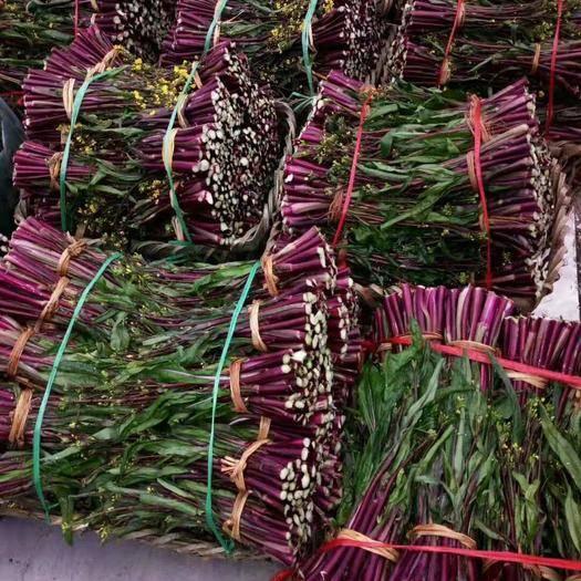 四川省內江市威遠縣紅油菜 大量有貨,一條龍服務