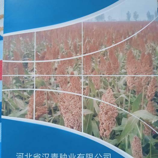 河北省滄州市青縣高粱種子 漢青種業現有育成高粱種二十余種,歡迎考察咨詢