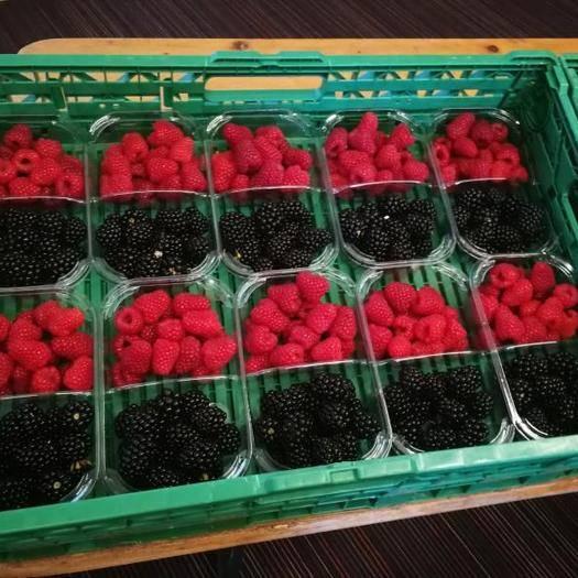 河北省承德市平泉市 黑樹莓