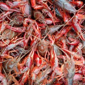 潛江小龍蝦 物美價廉2-10以上的規格