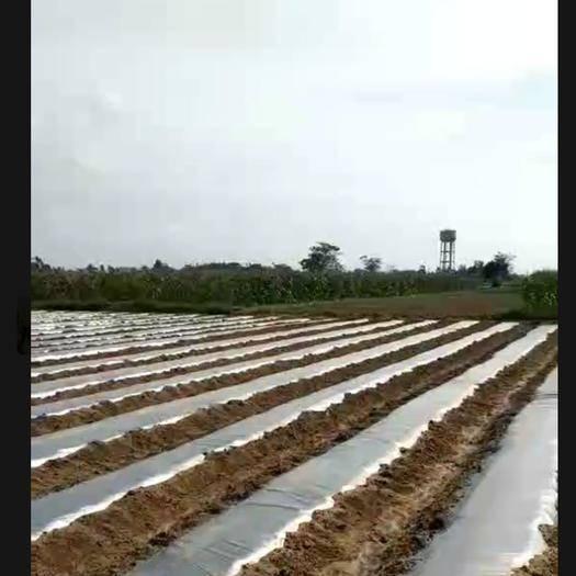 海南省东方市东方市水田 广西老板承玉雄村156亩细沙地还剩下170多亩需要的请联系我