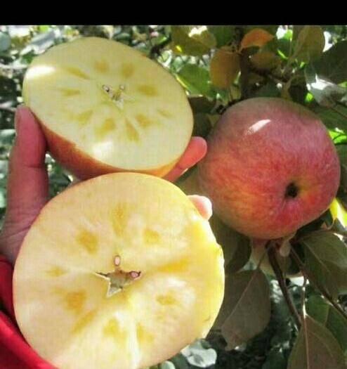 云南省昭通市昭陽區昭通蘋果 70mm以上 日曬面 光果