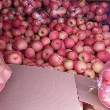 綏中蘋果8毛