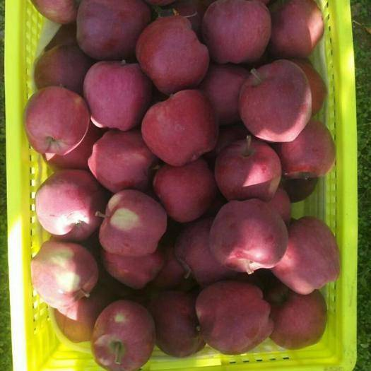 甘肅省平涼市莊浪縣 首紅蘋果,寶寶輔食首選,胃不好的朋友、老年人均可放心食用
