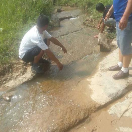 陜西省咸陽市禮泉縣有林地 有山泉水的種養基地