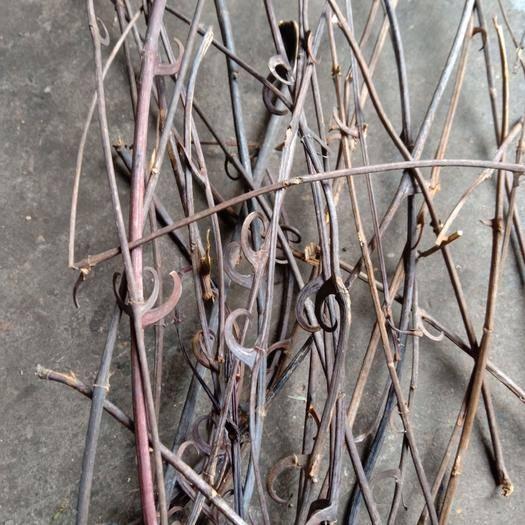 廣西壯族自治區梧州市岑溪市 100%純野生鉤藤全草(葉、大桿、帶鉤小桿)干貨,自然曬干