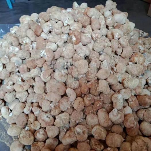 福建省寧德市古田縣 1、降低膽固醇 猴頭菇能降低血膽固醇和甘油三酯的含量,可調節