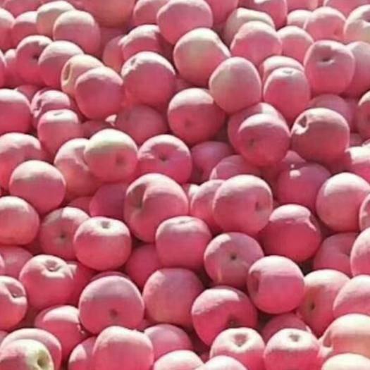 湖北省天門市天門市紅富士蘋果 70mm以上 全紅 紙袋