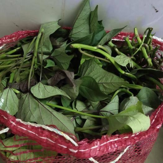 廣西壯族自治區南寧市馬山縣 大量供應紅薯苕尖