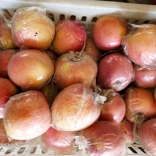 河南省商丘市虞城縣富士王蘋果 紅富士煙富零以大量下樹,產地直銷、